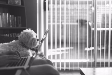 77% Of Office Workers Think Bring Your Dog To Work Day Is Unhygienic